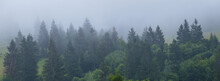 Fir Tree Forest On A Mount Slope In A Dense Mist