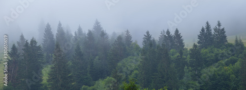 Fotomural fir tree forest on a mount slope in a dense mist