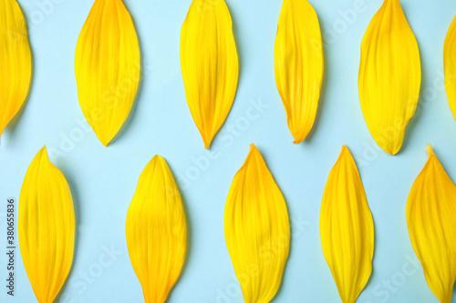 Fototapeta Fresh yellow sunflower petals on light blue background, flat lay obraz
