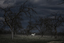 White Horse In A Dark Scary Fo...