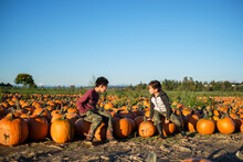 Asian Boys In A Pumpkin Field