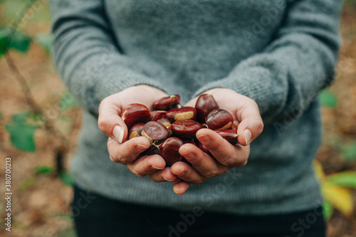 Gathering chestnuts in the woods - 380700213