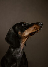 Studio Portrait Of A Adorable ...
