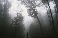 Ghost In The Fog In Haunted Forest