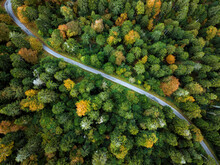 Road In A Autumnal Forest