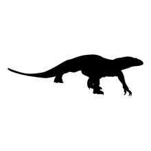 Walking Monitor Lizard (Varanu...