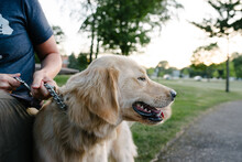Dog With Owner At A Park