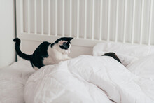 Cat Waking Their Owner In The Morning