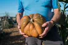 Senior Garndener Holding Pumpkin At Community Garden