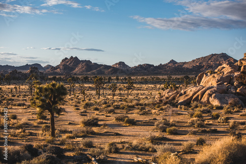 joshua tree landscape at sunset
