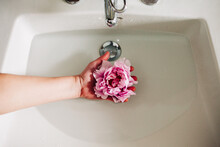 Hand Holding A Peony Flower In A Faucet