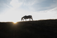 A Horse Is Silhouetted And Loo...