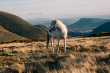 A Grey Horse On A Mountaintop Looks, His Neck Curled At Something Outside The Frame