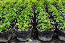 Pattern Of Growing Plants In J...