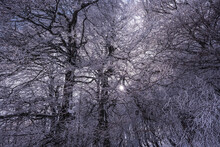 Snow Covered Canopy