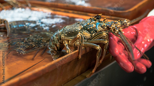 Stall vendor selling live Fresh lobsters on water at popular marketplace Canvas