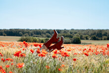 Legs In Red Shoes Popping Out Of Poppy Fields