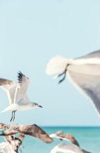 Gull's In Holbox