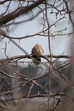 Little Beautiful Bird In A Tre...