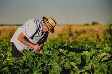 Side View Of Male Farmer In Ha...