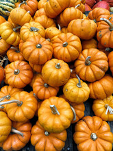 From Above Of Harvest Of Ripe Orange Pumpkins Placed On Stall On Local Grocery Market In New York