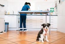Dog Sitting On Floor Of Vet Cl...