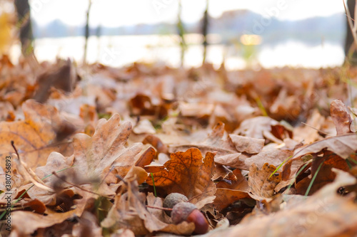 Photo Defocused autumn background with oak leaves