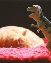 The Cat & The Tyrannosaurus