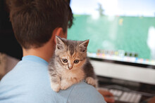 A Young Boy Plays Computer Games With A Kitten On His Shoulder
