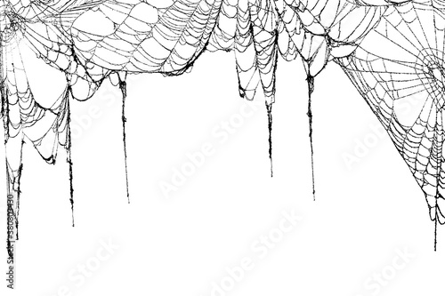 Real creepy spider webs hanging on white banner as a top border Wallpaper Mural