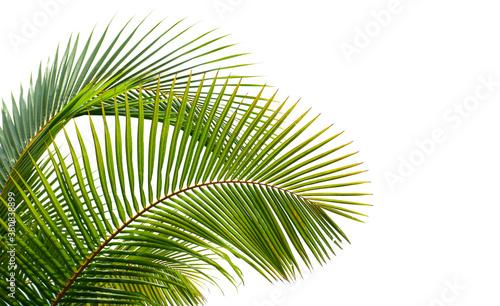 Obraz coconut palm leaves isolated on white background - fototapety do salonu