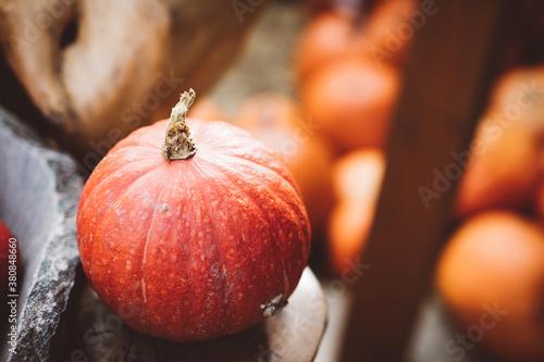 Fototapeta Red pumpkins in stone bowl. Autumn seasonal food obraz