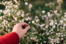 Hand Picking Autumn Wildflowers