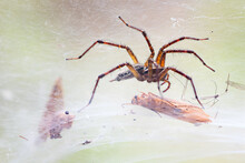 A Spider With Its Prey
