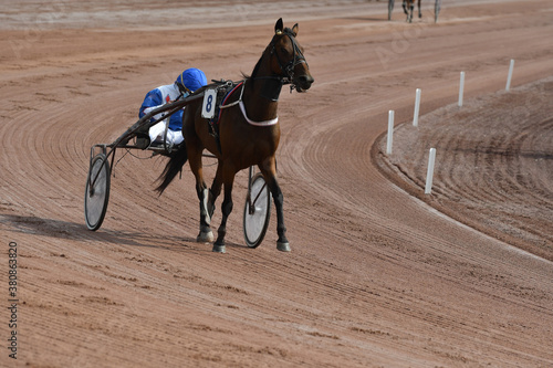 course de chevaux en sulky Canvas-taulu