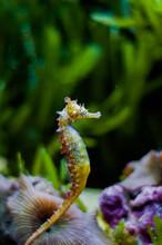 A Rainbow Coloured Seahorse