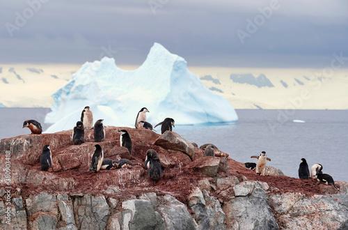 Foto chinstrap penguin colony in antarctica