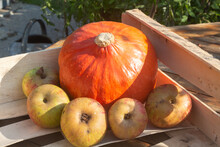 Pumpkin And Apples In A Crate ...