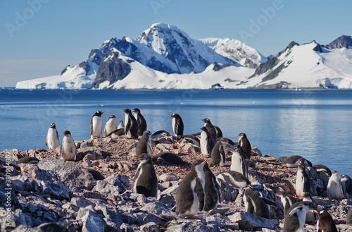 Leinwand Poster gentoo penguin group in antarctica