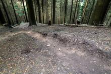 Forstschäden Durch Illegale M...