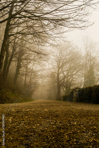Fotomural Misty autumn, the road shrouded in mist, trees without leaves
