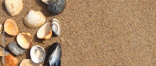 Tela different seashell lie on the sandy beach