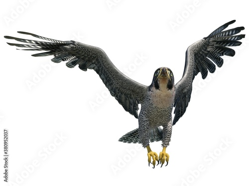 Cuadros en Lienzo Peregrine Falcon 3d illustration isolated on white background