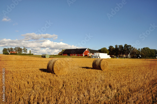 Fototapeta Bales of hay and farmhouses. obraz