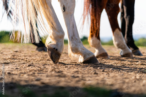 Close-up of a horse's hind legs and hooves in resting position on a horse pasture (paddock) at sunset. Typical leg position for horses. Concepts of rest, relaxation and well-being. Background blur.