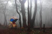 Rainy Day With Fog And Greenery, Matheran, Smallest Hill Station In India, Maharashtra