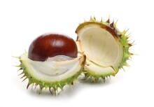 Green Chestnuts, Conker Tree F...