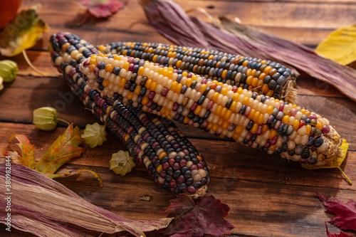 Obraz na plátně Native American Corn on a Wooden Background