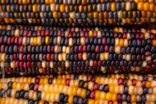Native American Corn on a Wooden Background Canvas Print