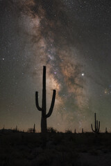 Silhouette of Saguaro Cactus against the Milky Way Galaxy